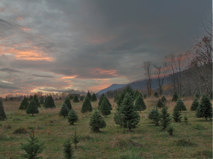 High Dynamic Range picture of a sunset over Santa's Delight Christmas Tree Farm in Carroll County, Virginia
